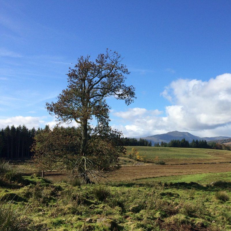 ballachraggan-farm-ash-tree-october