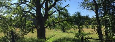 Lush green meadow and large tree