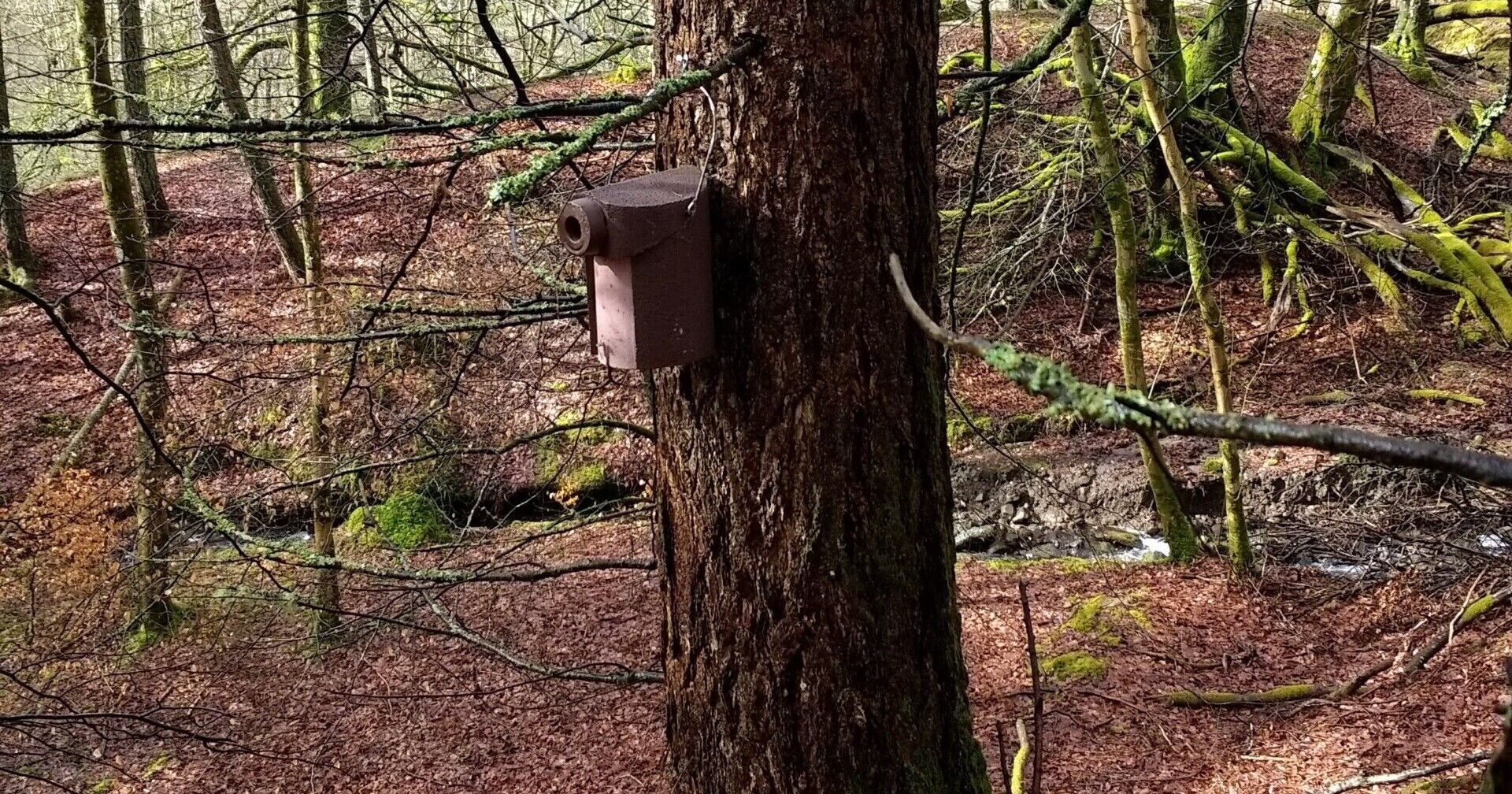 brown-bird-box-on-a-tree