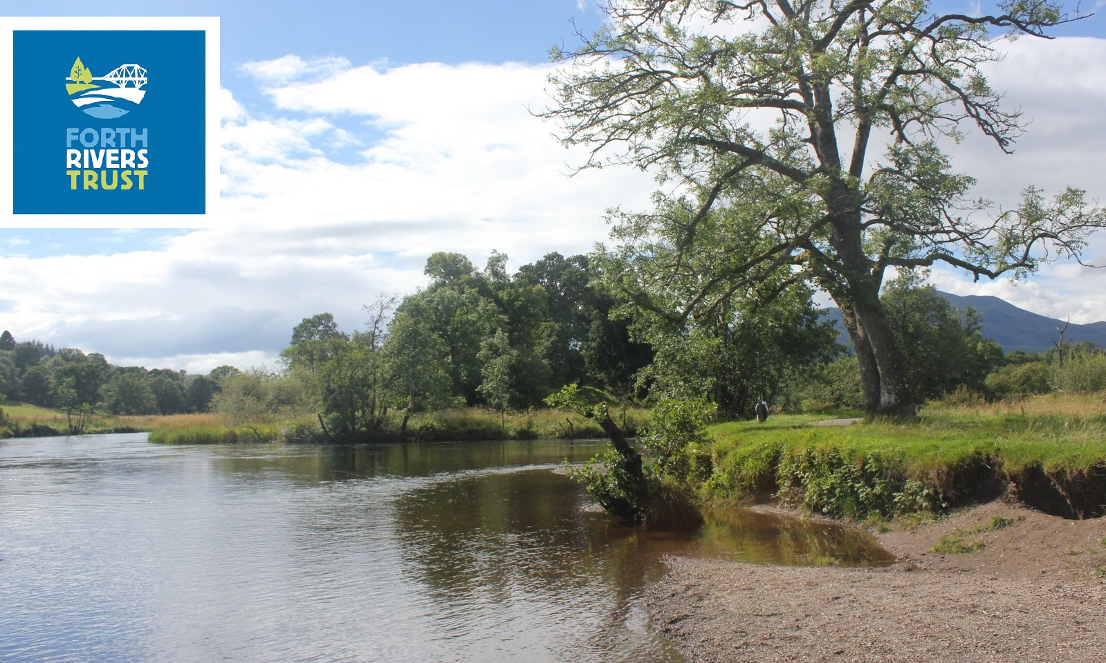 a-river-bank-with-trees